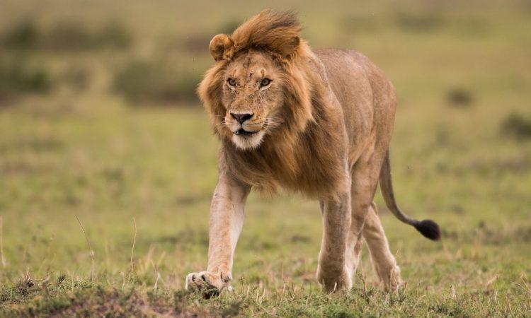 7 Days Kenya Wildlife Safari