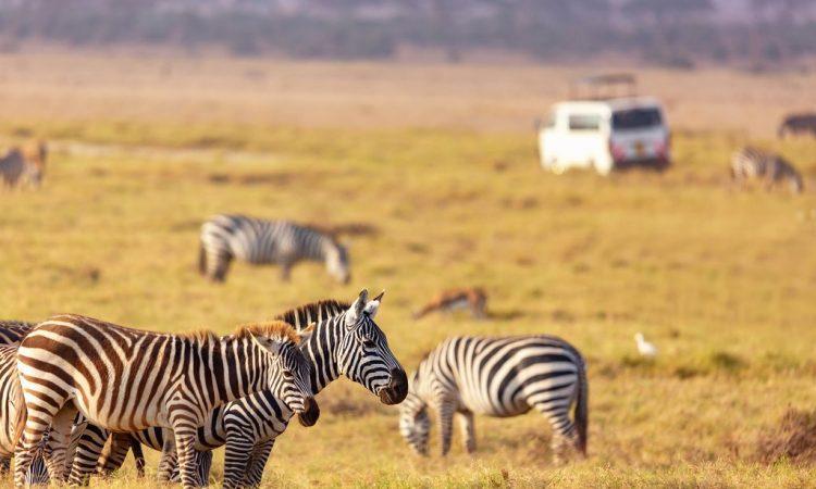 7 days Kenya Wildlife & Cultural safari