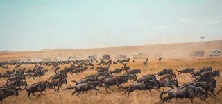 4 Days Masai Mara Wildebeest Migration Safari