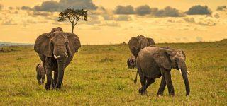 5 Days Kenya Wildlife & Cultural Safari