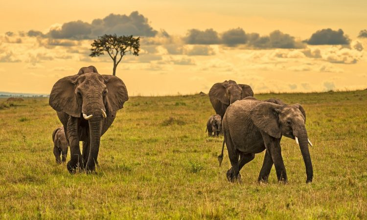 5 Days Kenya Wildlife & Cultural Safari
