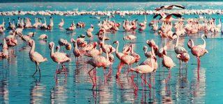 5 Days Maasai Mara & Lake Nakuru Wildlife Safari