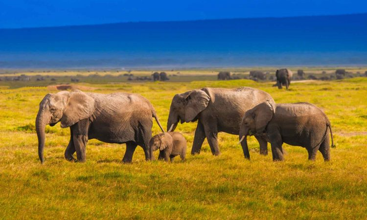 When to go to Kenya for a safari