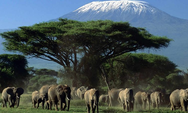 6 Reasons to visit Amboseli national park