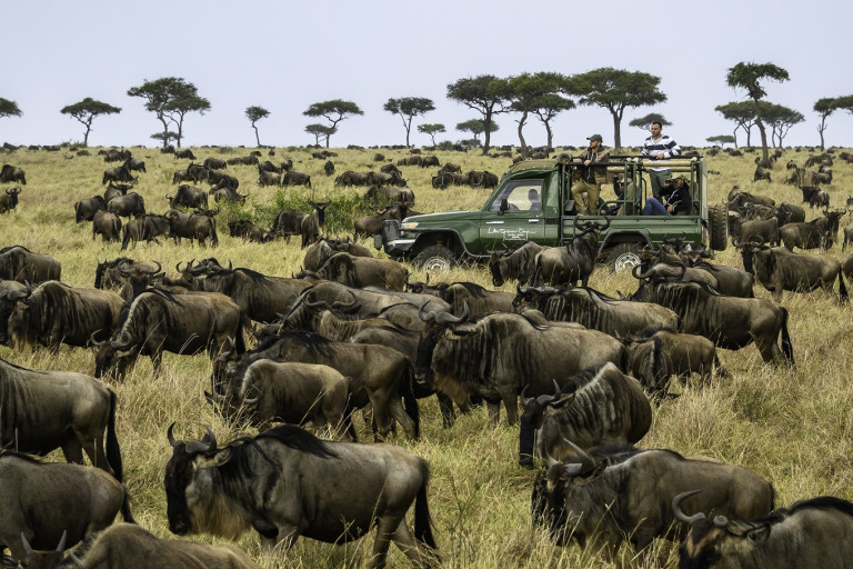 Stages of the Great Wildebeest Migration