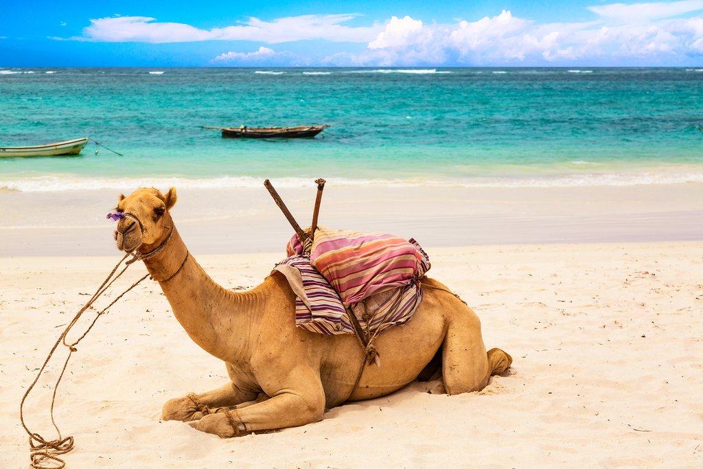 Beach safaris in Kenya
