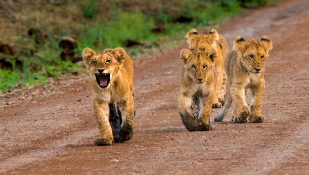 9 days Masai Mara, Serengeti & Bwindi safari
